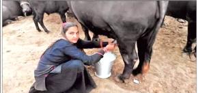 વડગામના નાગાણા ગામે અભણ મહિલાની આત્મનિર્ભરતા એક વર્ષમાં દૈનિક ૧૦૦૦ લિટર દૂધના ઉત્પાદન થકી ૧.૧૦ કરોડની કમાણી
